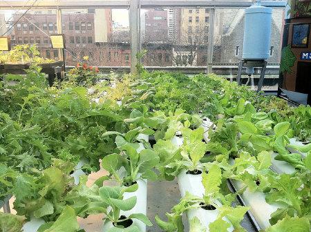 Supermarket_rooftop_garden